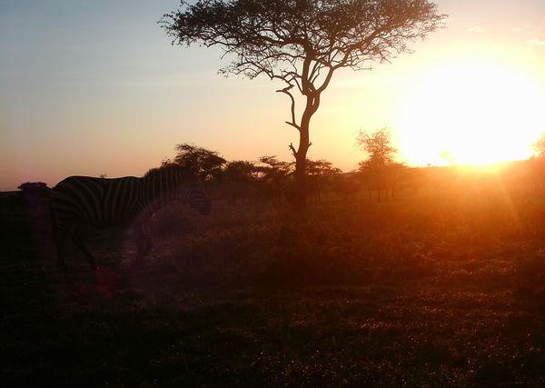 Lovely Sunset and #Zebra